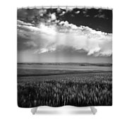 Grain Field Shower Curtain
