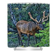 Grand Canyon # 33 - Grazing Elk Shower Curtain