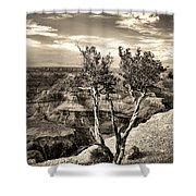 Grand Canyon Lone Tree Shower Curtain