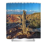 Grand Canyon Old Tree Shower Curtain