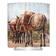 Grand Canyon Pack Mules Shower Curtain