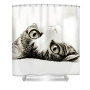 Grand Kitty Cuteness Bw Shower Curtain by Andee Design