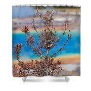 Grand Prismatic Wow Shower Curtain