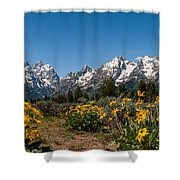 Grand Teton Arrow Leaf Balsamroot Shower Curtain by Brian Harig