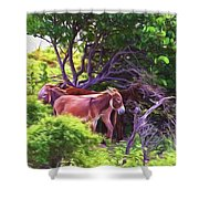 Grand Turk Donkeys In The Shade Shower Curtain
