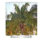 Grand Turk Palms On The Beach Shower Curtain