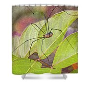 Grandaddy Long Legs Shower Curtain