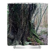 Grandfather Tree. Shower Curtain