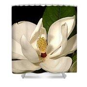 Grandiflora Shower Curtain