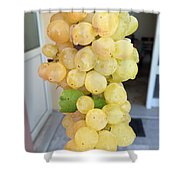Grape From Chios Mountains In Greece Shower Curtain