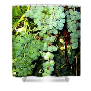 Grape Harvest Shower Curtain