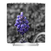Grape Hyacinth Shower Curtain