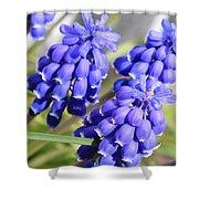 Grape Hyacinth Closeup Shower Curtain