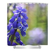 Grape Hyacinth II Shower Curtain