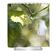 Grape Leaf Shower Curtain