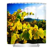 Grape Leaves And The Sky Shower Curtain