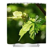Grape Leaves In Spring Shower Curtain
