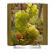 Grape Spiral Shower Curtain by Patricia Overmoyer