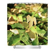 Grape Vine 3 Shower Curtain