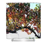 Grape Vine In Autumn Shower Curtain