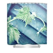 Grape Vine Old Style Background Shower Curtain