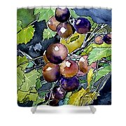 Grape Vine Still Life Shower Curtain