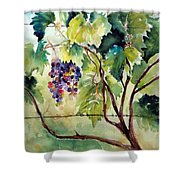 Grape Vines At Otter Creek Shower Curtain