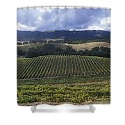 Grape Vines On Opolo Vineyards Shower Curtain