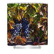 Grapes Of The Napa Valley Shower Curtain