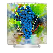 Grapes Of The Vine Shower Curtain