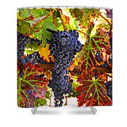 Grapes On Vine In Vineyards Shower Curtain by Garry Gay