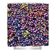 Wine Before It's Time Shower Curtain