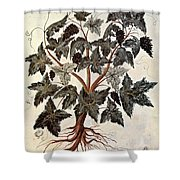 Grapevine, 1229 Shower Curtain