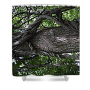 Grapevine Covered Tree Shower Curtain