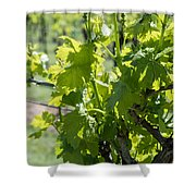 Grapevine In Early Spring Shower Curtain