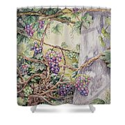 Grapevine Laurel Lakevineyard Shower Curtain