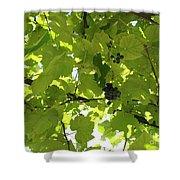 Grapevine Shower Curtain