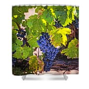 Grapevine With Texture Shower Curtain