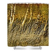 Grass And Birch Shower Curtain