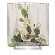 Grass Finch Or Bay Winged Bunting Shower Curtain