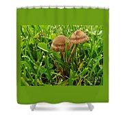 Grass Mushroom Pair           Tubaria Fungii           May           Indiana Shower Curtain