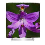Grass Pink Orchid Shower Curtain