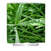 Grass Plus Water Shower Curtain