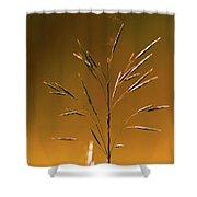 Grass During Sun Set Shower Curtain