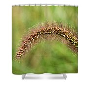 Grass Seed Shower Curtain