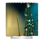 Grass Seed With Blue Shower Curtain