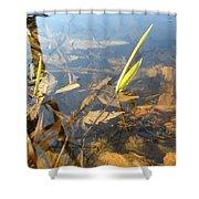Grass Spears In Still Water Shower Curtain