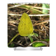 Grass Yellow 01 Shower Curtain
