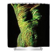 Grasses Shower Curtain by Arla Patch