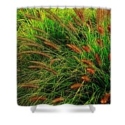 Grasses In The Verticle Shower Curtain